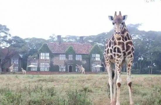 Tourism Business in Kenya