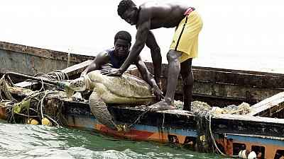 Senegalese fisherman protect sea turtles