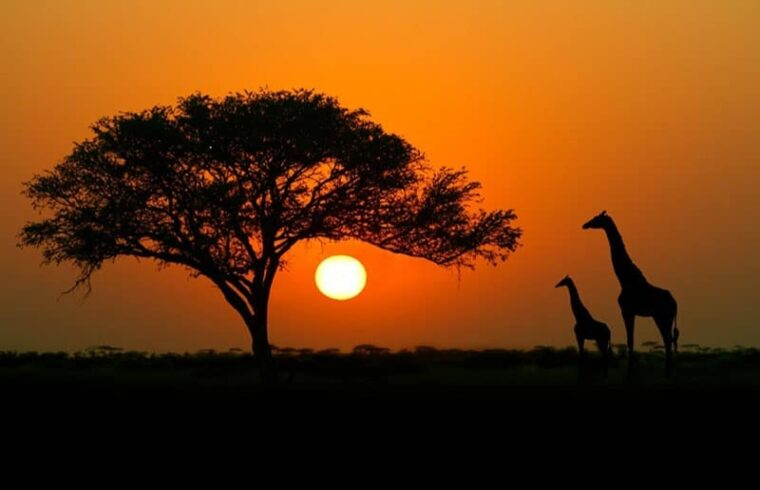 africa,New tourist destination for chinese,china people