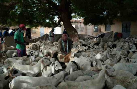 Millions in Senegal are preparing for Tabaski,pandemic in senegal